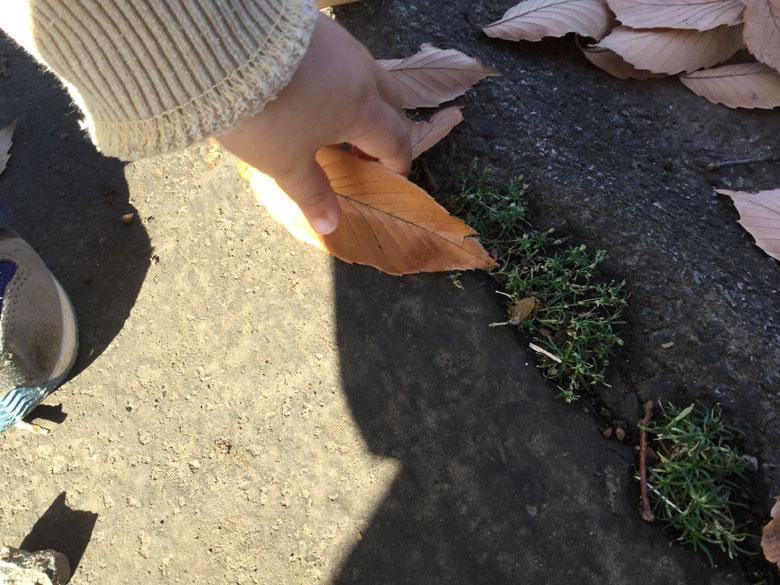 虫を見つけた息子の手