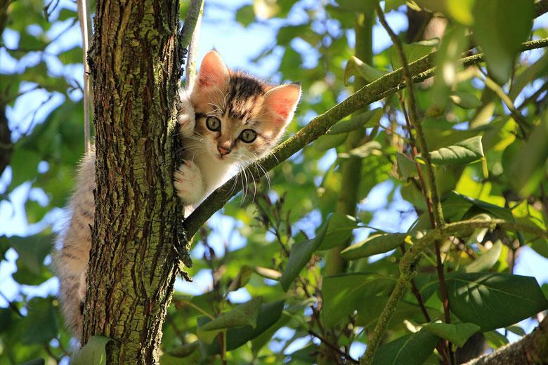 木の上からのぞく猫